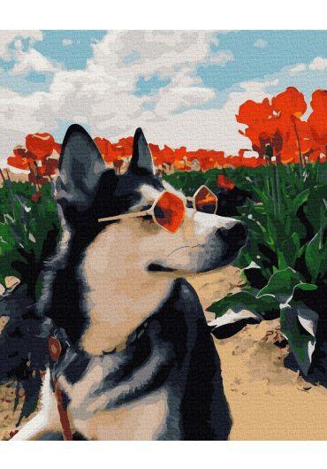 Set Picturi pe numere, Acuarello, 40X50 cm - Husky