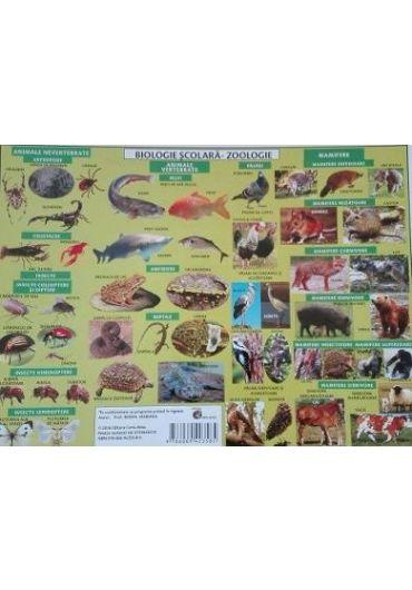 Plansa Biologie scolara - Zoologie
